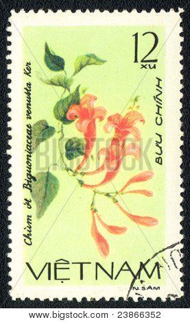 Bignoniaceae Venusta