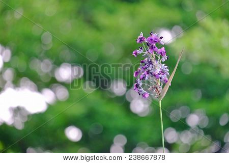 A Bouquet Of Purple Waterplant Blossom At Botanical Garden With Bokeh Light And Blurred Green Backgr