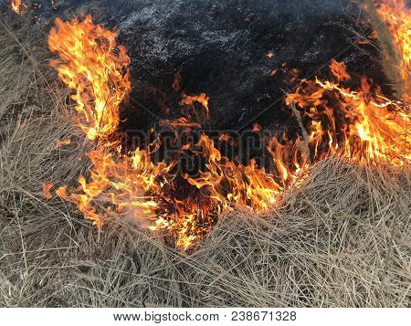 Background Of Burning Dry Grass. Part Of The Grass Was Burned And Became Black, The Other Part Is Bu