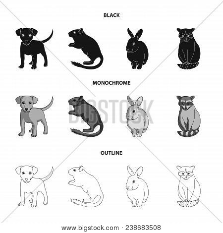Puppy, Rodent, Rabbit And Other Animal Species.animals Set Collection Icons In Black, Monochrome, Ou