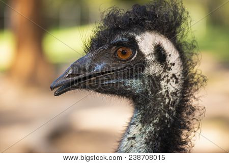 Emu By Itself Outdoors During The Daytime.