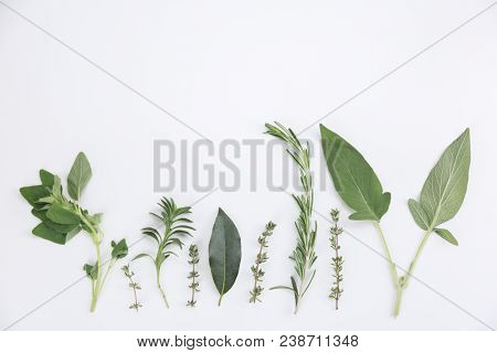Assorted Sprigs Of Fresh Herbs Displayed As A Border On White With Sage, Basil, Thyme, Rosemary , Or