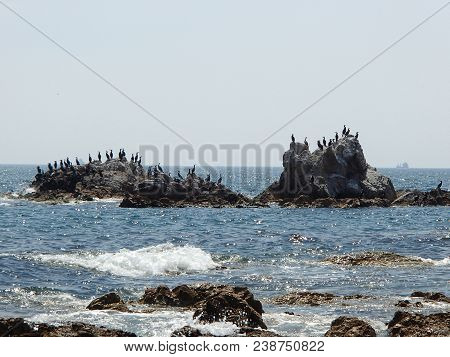 Bering cormorants on the beach rock on sea and sky background