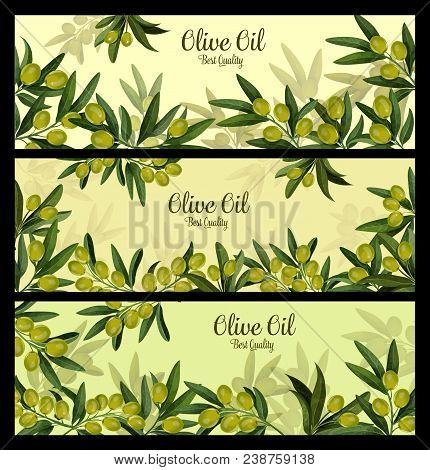 Green Olive Branch Banner For Natural Oil And Organic Olive Product Label Template. Olive Fruit, Tre