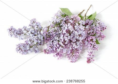 Styled Stock Photo. Spring Feminine Scene, Floral Composition. Bunch Of Beautiful Blossoming Purple