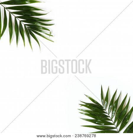 Styled Stock Photo. Jungle Composition Of Green Palm Leaves Isolated On White Background. Tropical S