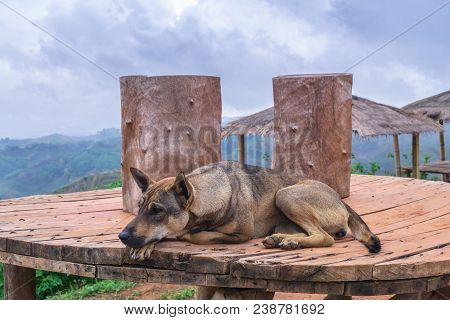 Loneliness And Sadly , Homeless Abandoned Stray Rural Dog Sleeping Lazy On Rural Hill