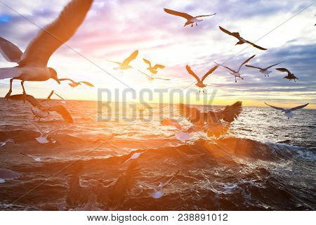 Flock Of Gulls Flying Above Body Of Water During Daytime