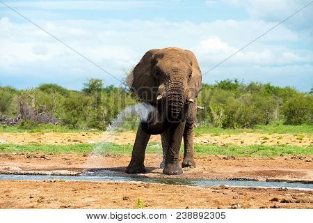 Gray Elephant Near Body Of Water At Daytime