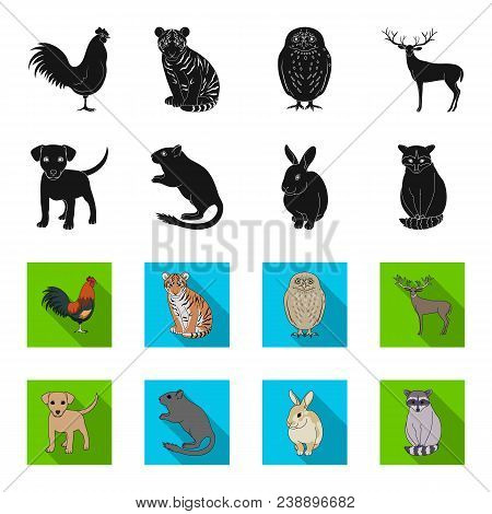 Puppy, Rodent, Rabbit And Other Animal Species.animals Set Collection Icons In Black, Flet Style Vec