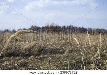 Dry Grass Texture Background. Green Grass And Dry Grass. Grass Perspective. Abstract Nature Backgrou