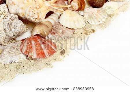 Collection Of Sea Shells On White Background