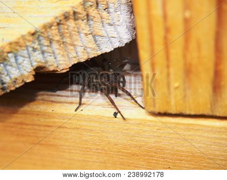 Black Spider Sits On A Wooden Surface. Arthropod. Macro Mode.
