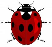 Vector illustration of a ladybird on white background poster