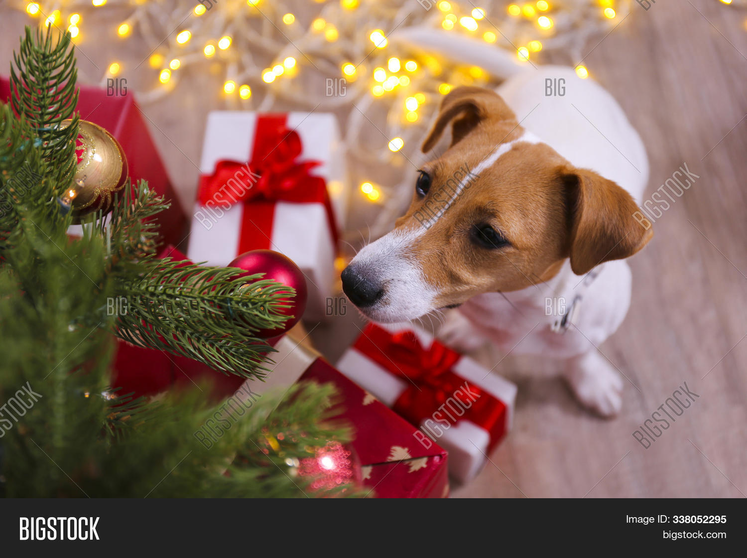 Adorable Pet Home Image Photo Free Trial Bigstock