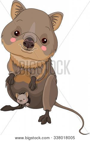 Illustration of very cute quokka