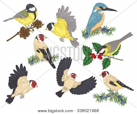 Colorful Birds Collection. Tits, Finches, Goldfinches And Kingfisher Sitting On A Branch. Vector Ill