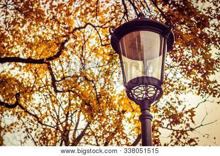 Autumn Park, Yellow Tree And Lantern, Lantern On The Street, Lantern In The Park, Autumn Walk, Lante