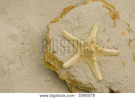starfish on a big stone at the bich poster