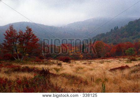 North Carolina Mountain Meadow