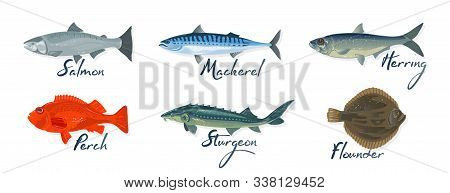Big Set With Marine Fishes And Lettering Salmon, Mackerel, Perch, Herring, Sturgeon, Flounder. Raw,