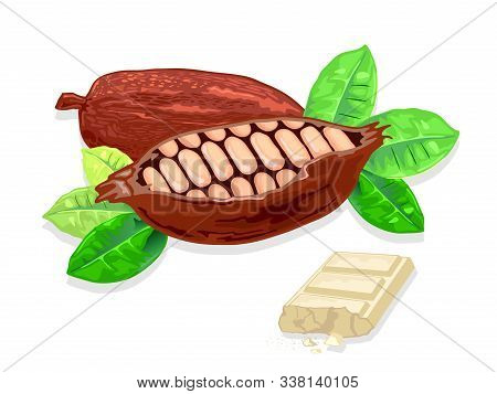 Cocoa Beans Are Ingredients For Cooking Delicious White Milk Chocolate. Product Making Body Fat, Add