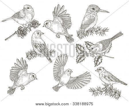Birds Collection. Tits, Finches, Goldfinches And Kingfisher Sitting On A Branch. Vector Illustration