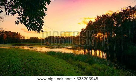 Louisiana Swamp Sunset And Silhouettes
