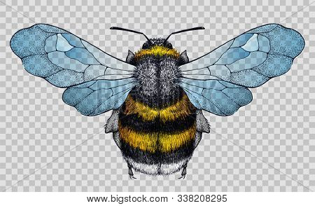 Honey Bee Tattoo. Bee With Blue Wings. Illustration On Transparent Background. Symbol Of Diligence,