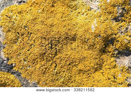 Yellow Mos In The Nature On The Rock Stone