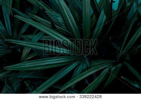 Dark Tone Concept Of Tropical Green Leaf Texture Background.