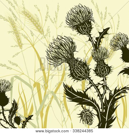 Silhouette Of Thistle On Background Meadow Plants And Cereals. Floral Composition With Wild Flowers.
