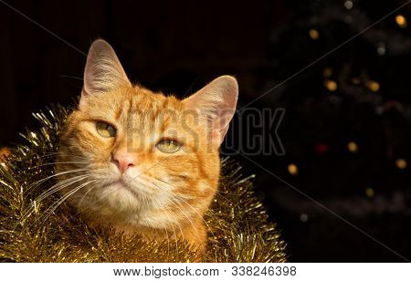 Handsome festive ginger tabby cat wearing golden tinsel around his neck, with a Christmas tree on the background