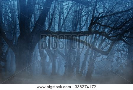 Magical Gate In A Mysterious Forest With Fog