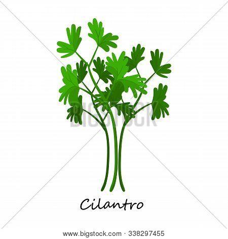 Cilantro Vector Icon.cartoon Vector Icon Isolated On White Background Cilantro.