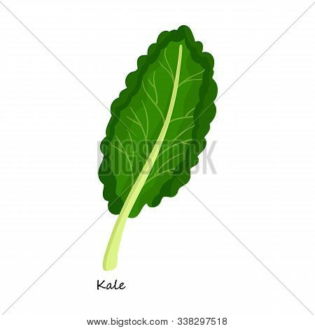 Kale Vector Icon.cartoon Vector Icon Isolated On White Background Kale.