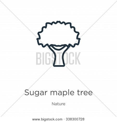 Sugar Maple Tree Icon. Thin Linear Sugar Maple Tree Outline Icon Isolated On White Background From N