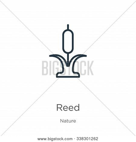 Reed Icon. Thin Linear Reed Outline Icon Isolated On White Background From Nature Collection. Line V