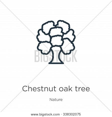 Chestnut Oak Tree Icon. Thin Linear Chestnut Oak Tree Outline Icon Isolated On White Background From