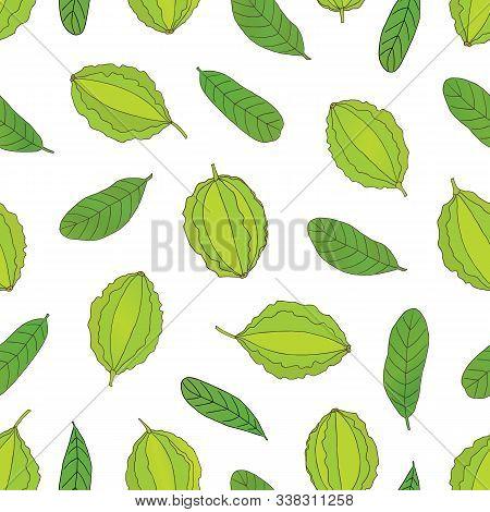 Medicinal Herbs Collection. Vector Hand Drawn Seamless Pattern Of A Medicinal Plant Terminalia Arjun