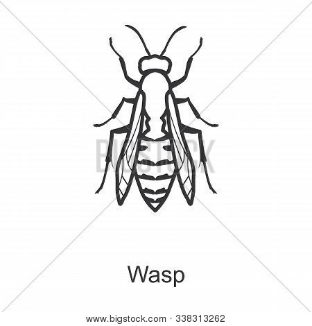 Wasp Vector Icon.line Vector Icon Isolated On White Background Wasp.