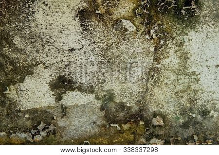 Close-up Of Dry Moss On White Cement Crack Wall And Peeled Paint Caused By Water And Sunlight. Peel