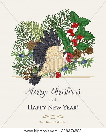 Christmas Card With A Bird And Winter Plants. Hand Drawn Finch, Holly Branch, Juniper, Pine And Fern