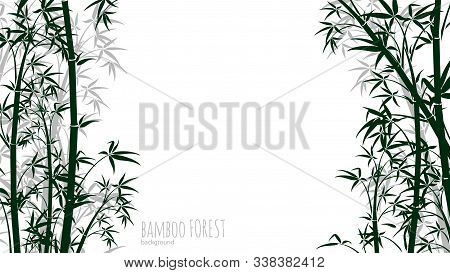 Bamboo Forest Background. Asian Plants Silhouettes Backdrop. Chinese, Japanese Tropical Rainforest V