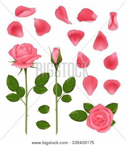 Pink Roses. Buds And Petals Of Beautiful Romantic Wedding Plants Roses With Leaves Vector Realistic