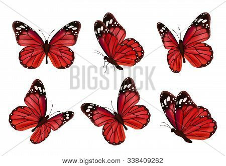 Butterflies. Realistic Colored Insects Beautiful Moth Vector Collection Of Butterflies. Illustration