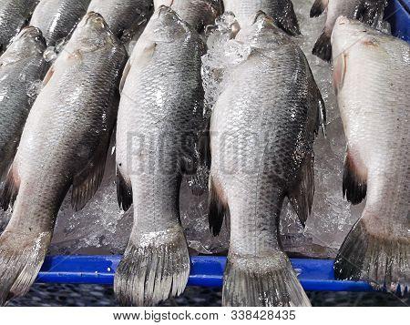 Fresh Barramundi Fish In The Market