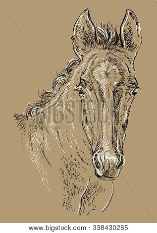Cute Pony Foal Portrait. Young Pony Head In Black And White Colors Isolated On Beige Background. Vec