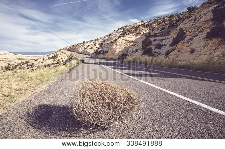 Tumbleweed On A Road, Color Toning Applied, Usa.