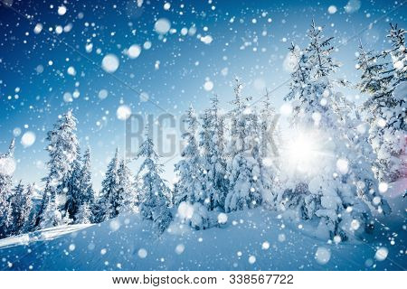 Brilliance snowflakes in snowy coniferous forest. Location place of Carpathian mountains, Ukraine, Europe. Captivating wintry wallpapers. Christmas holiday concept. Happy New Year! Beauty of earth.